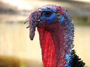 turkey profile