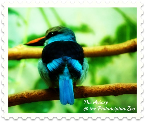 kingfisher-philadelphia-zoo