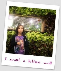 vertical gardening- lettuce