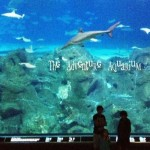 Camden Adventure Aquarium + Printable Scavenger Hunt