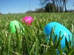 Newark Delaware Egg Hunt 2015