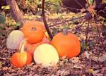 Millville Great Pumpkin Festival