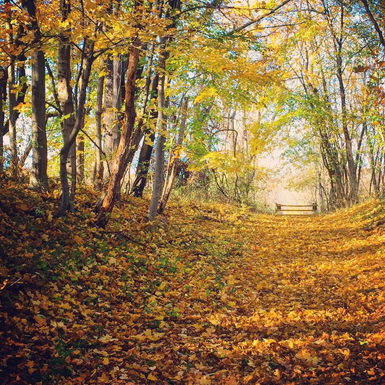 fall trail hike