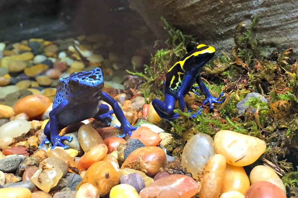 frogs exhibit philly academy natural sciences